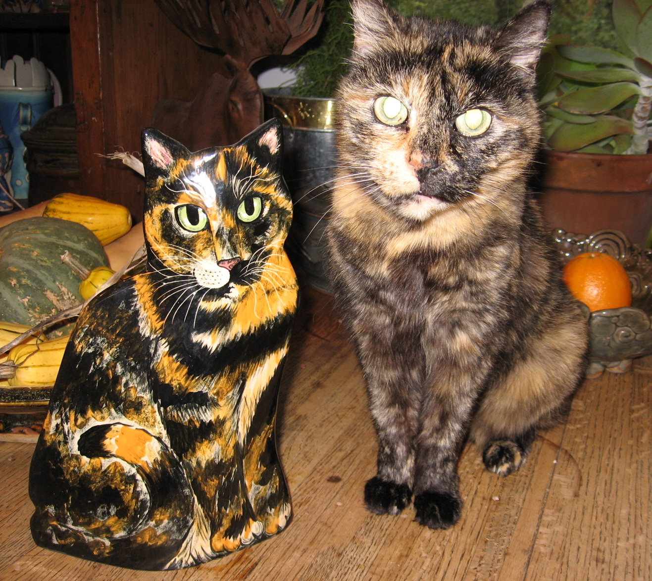 Simons blog mom likes to go visit her grandsonian and play games they play all sorts of games but cards are a favorite ians cat bangle who is a bengal cat reviewsmspy